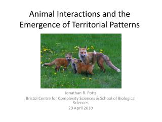 Animal Interactions and the Emergence of Territorial Patterns