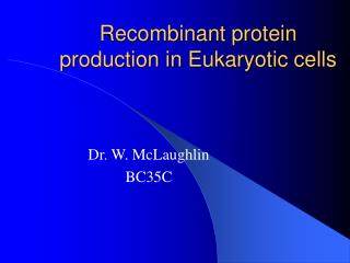 Recombinant protein production in Eukaryotic cells