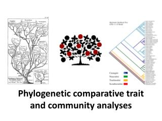 Phylogenetic comparative trait and community analyses