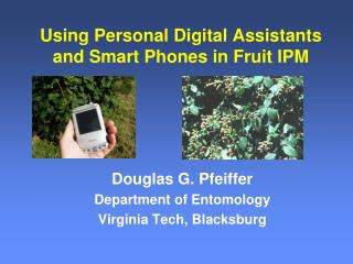 Using Personal Digital Assistants and Smart Phones in Fruit IPM