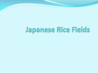 Japanese Rice Fields