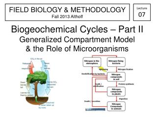 Biogeochemical Cycles – Part II Generalized Compartment Model & the Role of Microorganisms