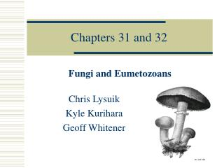 Chapters 31 and 32