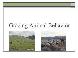 Grazing Animal Behavior