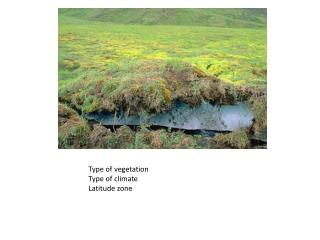 Type of vegetation Type of climate Latitude zone