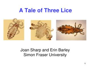 A Tale of Three Lice