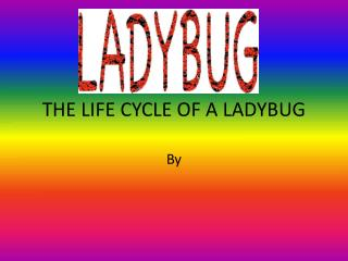 THE LIFE CYCLE OF A LADYBUG