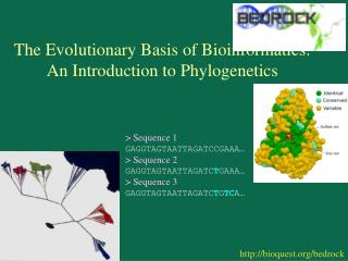 The Evolutionary Basis of Bioinformatics: An Introduction to Phylogenetics