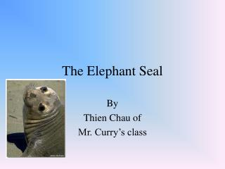 The Elephant Seal