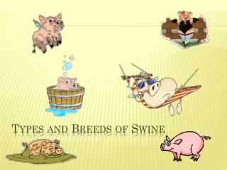 Types and Breeds of Swine