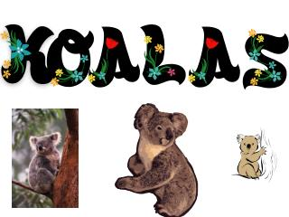 My koala questions and answers