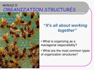 MODULE 13 ORGANIZATION STRUCTURES