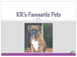 KR's Favourite Pets