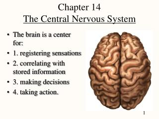 Chapter 14 The Central Nervous System