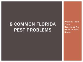 8 Common Florida Pest Problems - Prevent Them From Becoming