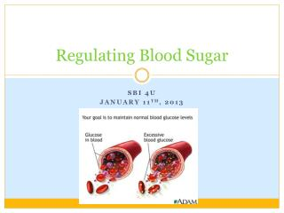 Regulating Blood Sugar