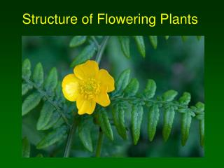 Structure of Flowering Plants