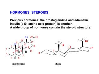 HORMONES: STEROIDS Previous hormones: the prostaglandins and adrenalin. Insulin (a 51 amino acid protein) is another.