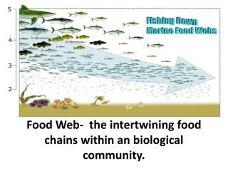 Food Web-  the intertwining food chains within an biological community.