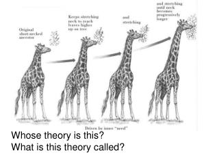 Whose theory is this?   What is this theory called?