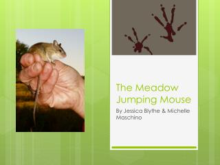 The Meadow Jumping Mouse
