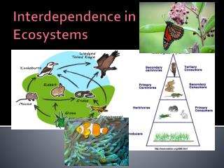 Interdependence in Ecosystems