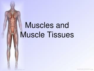 Muscles and  Muscle Tissues