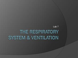 The Respiratory System & Ventilation