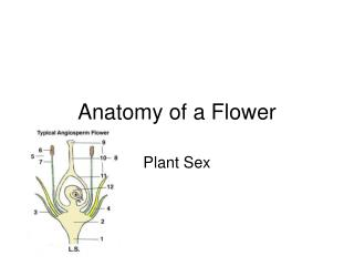 Anatomy of a Flower