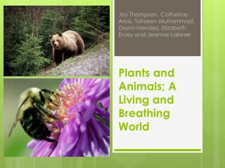 Plants and  Animals; A Living  and Breathing World