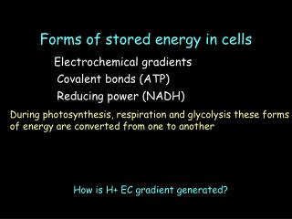 Forms of stored energy in cells