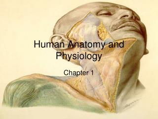 Human Anatomy and Physiology