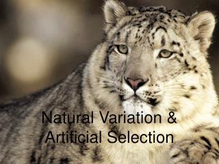 Natural Variation & Artificial Selection