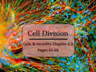 Cell Division