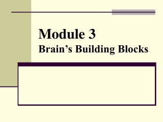 Module 3 Brain's Building Blocks