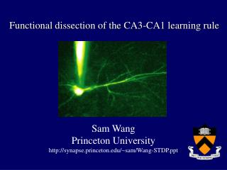 Functional dissection of the CA3-CA1 learning rule