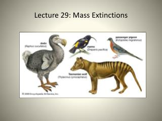 Lecture 29 : Mass Extinctions