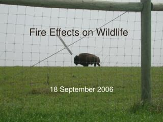 Fire Effects on Wildlife