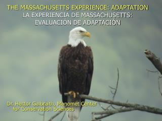 THE MASSACHUSETTS EXPERIENCE: ADAPTATION