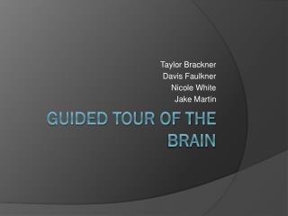 Guided Tour of the Brain