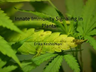 Innate Immunity Signaling in Plants