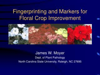 Fingerprinting and Markers for Floral Crop Improvement