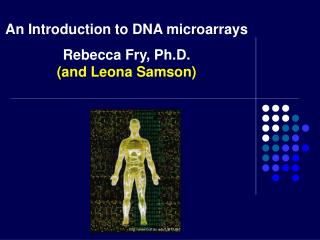An Introduction to DNA microarrays Rebecca Fry, Ph.D. (and Leona Samson)