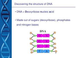 Discovering the structure of DNA