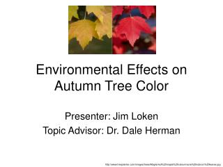 Environmental Effects on Autumn Tree Color