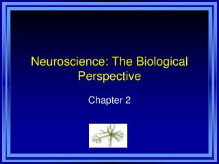 Neuroscience: The Biological Perspective