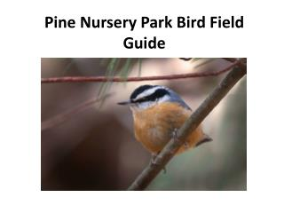Pine Nursery Park Bird Field Guide