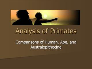 Analysis of Primates