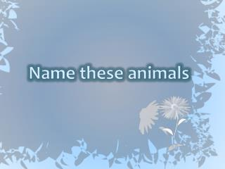 Name these animals