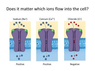 Does it matter which ions flow into the cell?